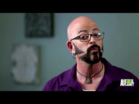 How Long Can Jackson Galaxy Stay In The Ring With This Very Angry Kitty