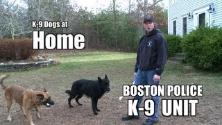 Boston Police K-9 Unit : Police Dogs at Home