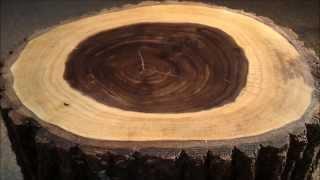 Carpenter's anvil