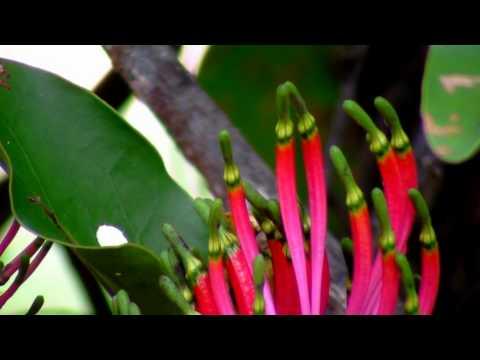 Parasite Plants