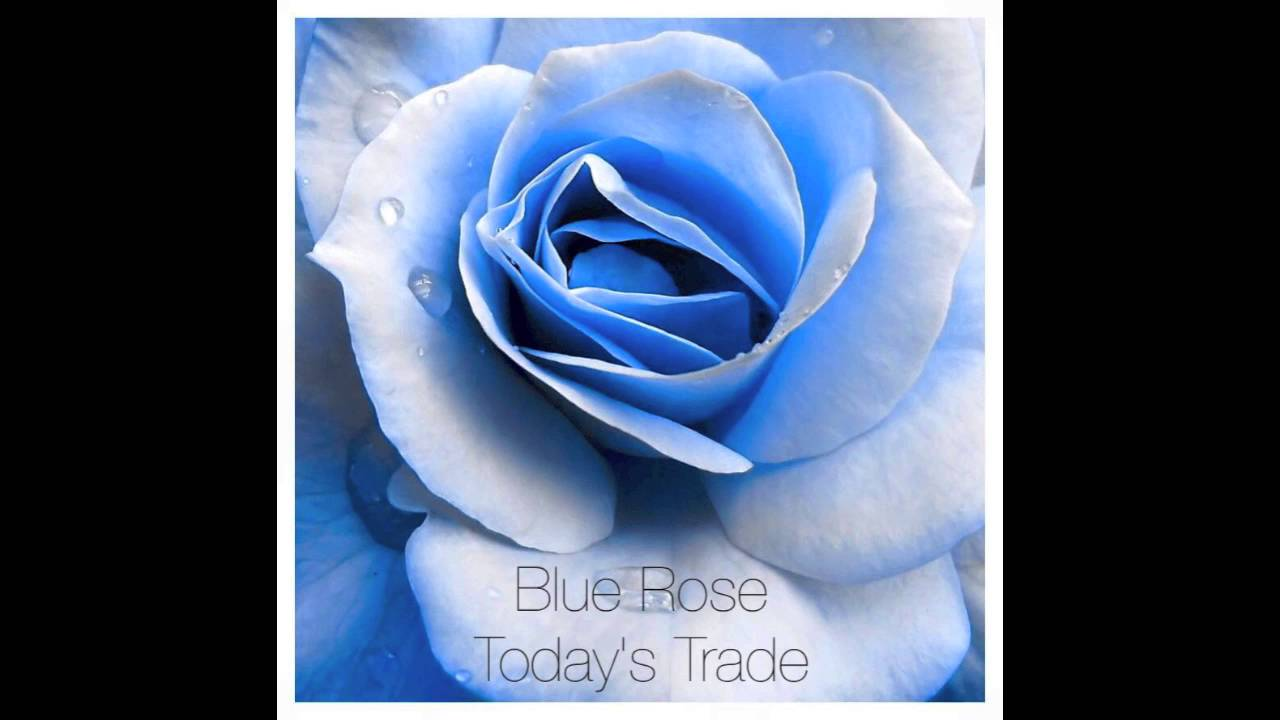 Download Blue Rose EP - Today's Trade