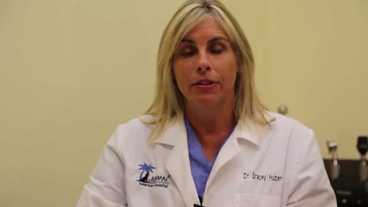 Animal Oasis Veterinary Hospital Naples Florida