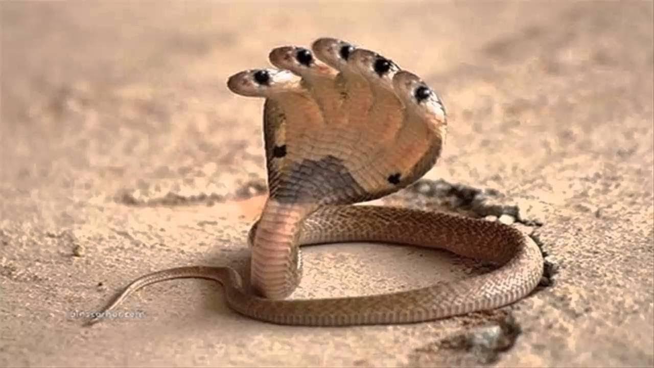 أخطر 10 ثعابين في العالم Youtube