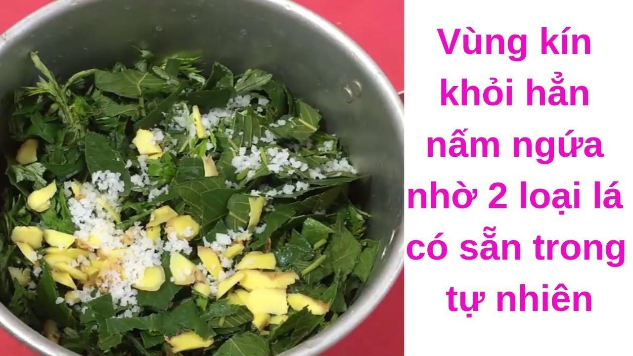Vùng kín khỏi hẳn nấm ngứa, viêm phụ khoa nhờ 2 loại lá có sẵn trong tự nhiên