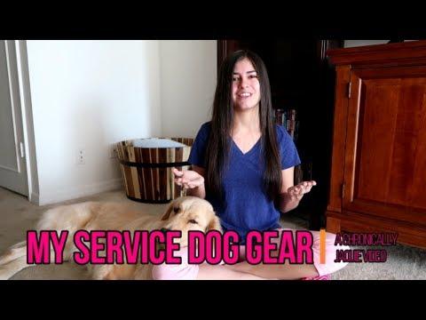 My Service Dog Gear Haul! 🐕
