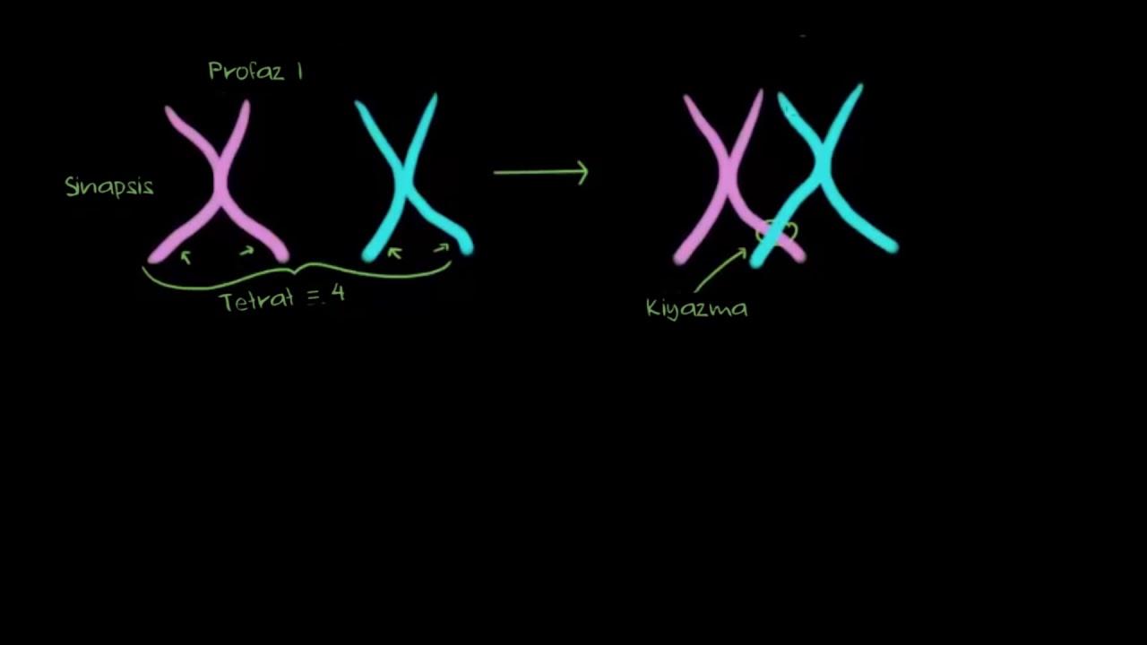 Genetik Rekombinasyon Cesitlenme 1 Bolum Fen Bilimleri Biyoloji Youtube