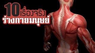 10 เรื่องจริงของ ร่างกายมนุษย์ (Human Body) ที่คุณอาจไม่เคยรู้ ~ LUPAS