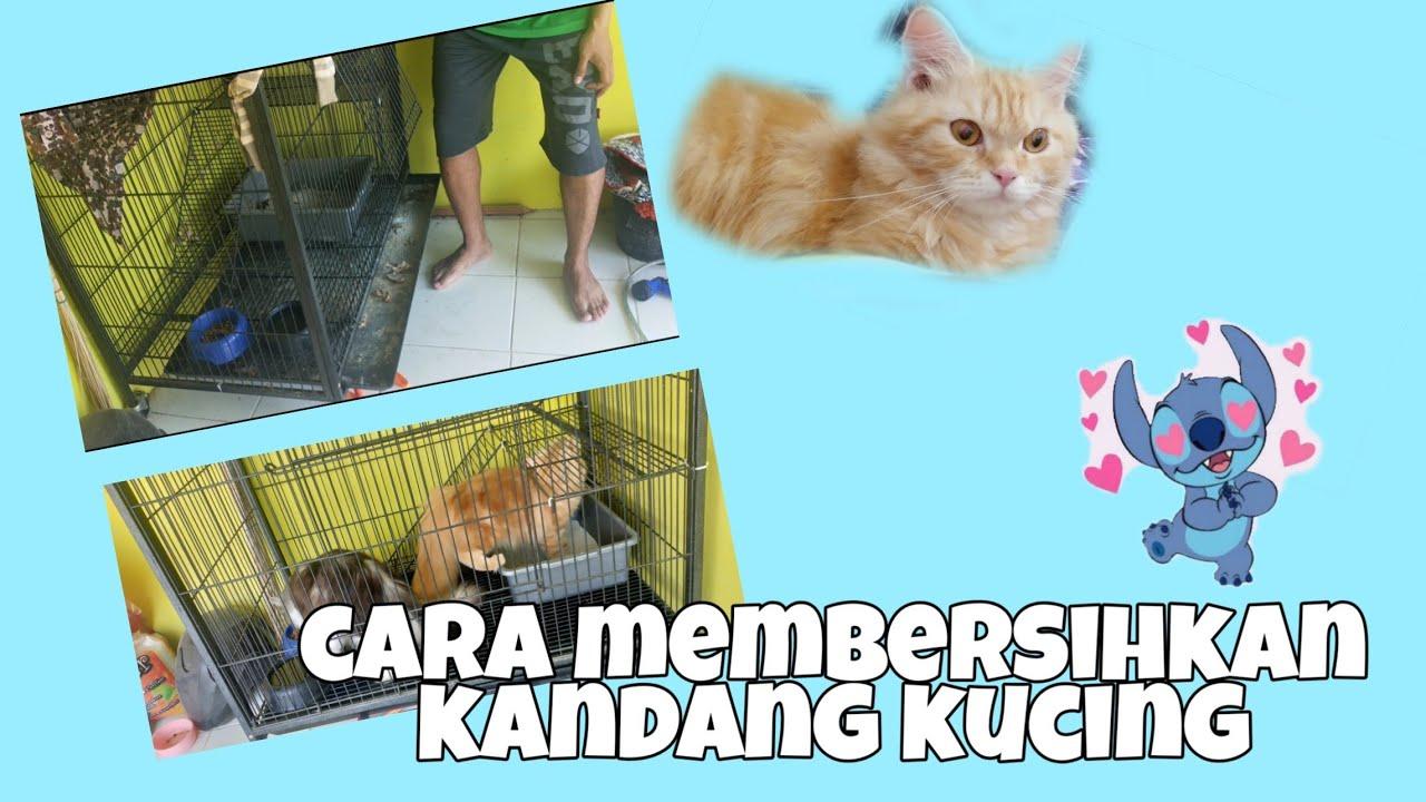 Cara Membersihkan Kandang Kucing - YouTube
