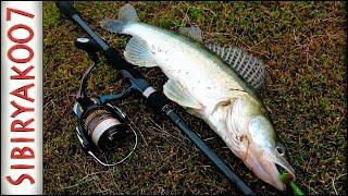 Весенняя ловля судака на джиг с берега на реке -