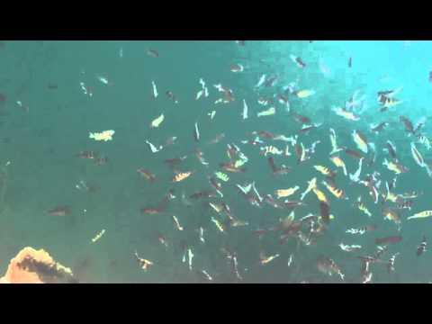 Aloha Tower harbor fish