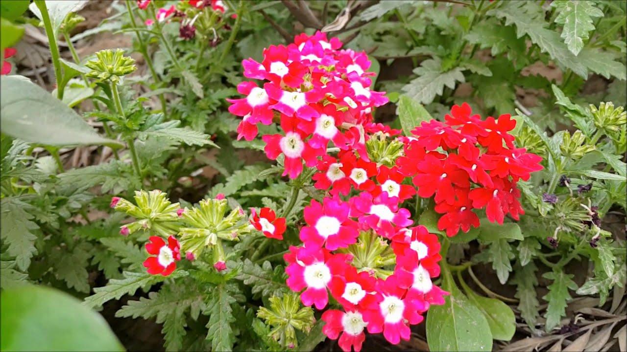 Children S Park New Delhi Youtube