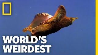 Underwater Love Chain   World's Weirdest