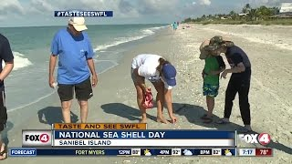 How to get the best seashells by the seashore