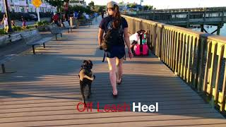 "Pitbull ""Zeus"" 5 months old