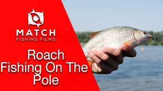 Pole Fishing For Roach