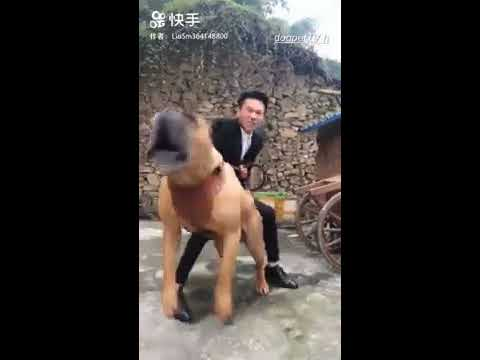 The Best Funny Dog Compilation 2019