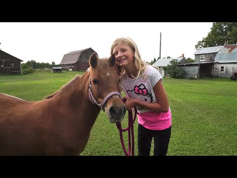 Miniature Horse Surprise! Lacey