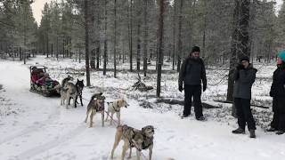 FINLAND ROADTRIP 🇫🇮 Reindeer & Huskies fun