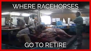 Where Racehorses Go To Retire thumbnail