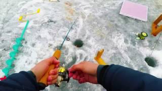 Ice fishing for Lake Whitefish on Banks Lake