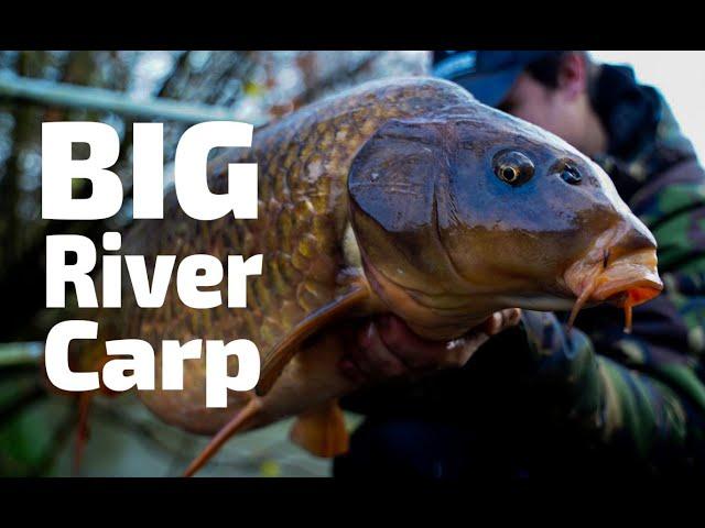 BIG River Carp