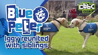 Cute dog reunited with siblings on CBBC Blue Peter