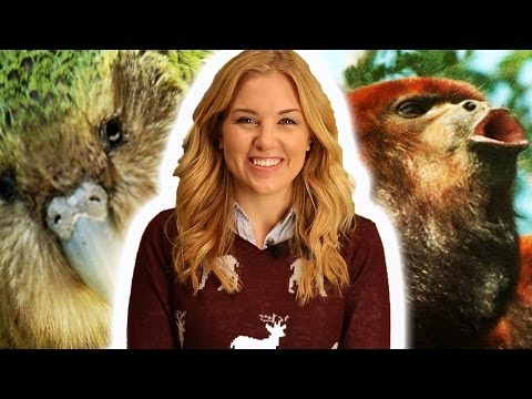 Top 10 Awesome Animal Sounds | Earth Unplugged