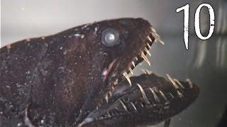 Top 10 Creepy Deep Sea Creatures