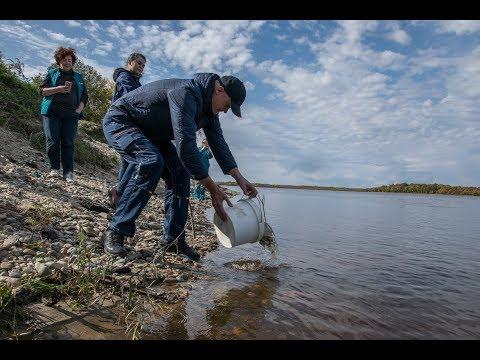 Экологи Амурского ГПЗ выпустили в реку Зею  финальную партию молоди сазана