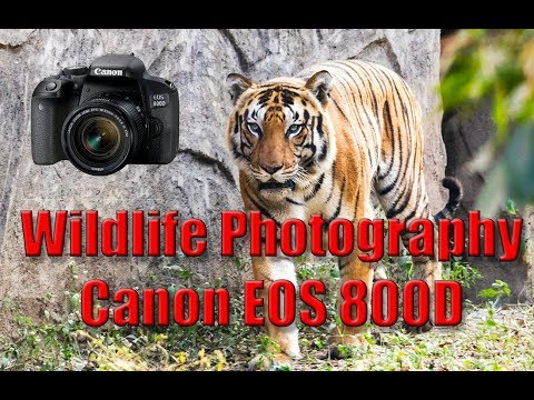 Wildlife Photography with Canon EOS 800D (Canon Rebel T7i ) DSLR and Canon EF 55-250 STM lens