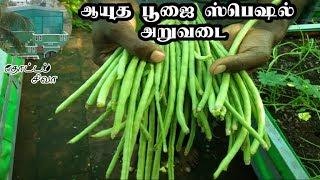 மாடி தோட்டம் அறுவடை - ஆயுத பூஜை ஸ்பெஷல்