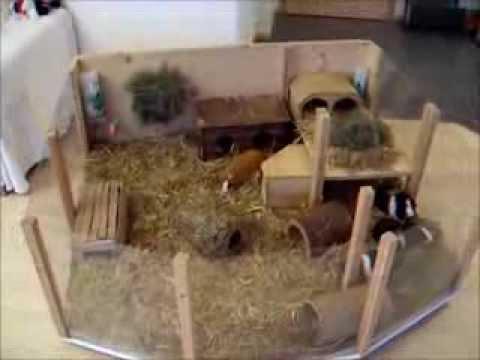 meerschweinchenstall mit loft charakter youtube