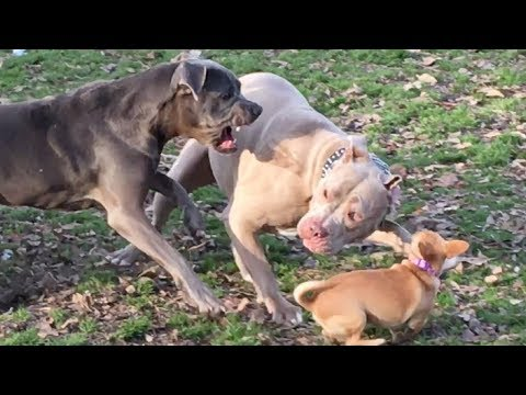 Rowdy Dog Park Day