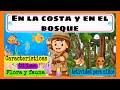 Video de El Bosque
