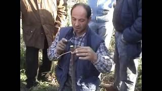 Download lagu Corso di innesto - lezione con Antonio Santini, agrotecnico esperto forestale