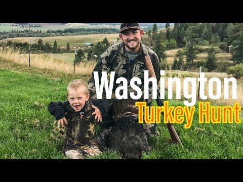 Washington Fall Turkey Hunt   Spot And Stalk