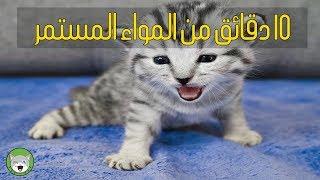 10 دقائق مواء القطط - يجعل القطط تسترخي