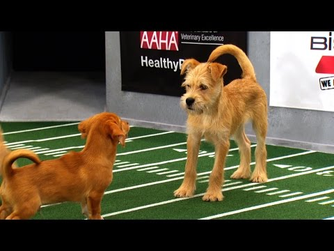 Ginger - Relive the best Puppy Bowl plays!
