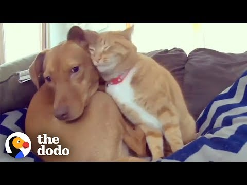 Morgen - Footage of Dog & Cat Becoming Cuddle Buds