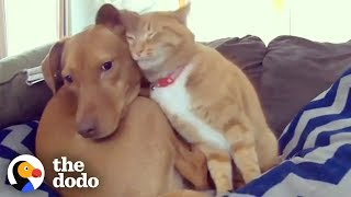 Hidden Camera Catches Cat Comforting Anxious Dog While Familys Away  The Dodo Odd Couples