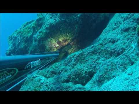 zıpkınla balık avı grida atışları ,spearfishing golden grouper