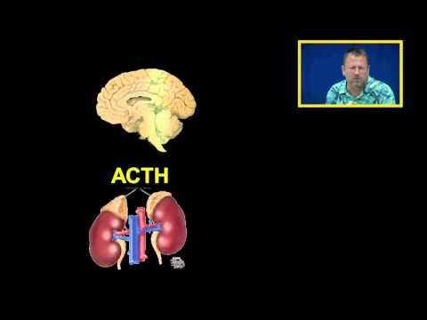 Cortisol and Glucocorticoids