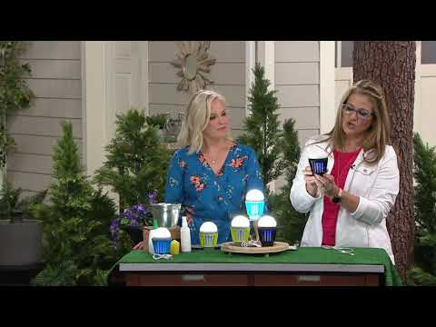 Evergreen Z-Fence Mosquito Zapper with LED Light on QVC