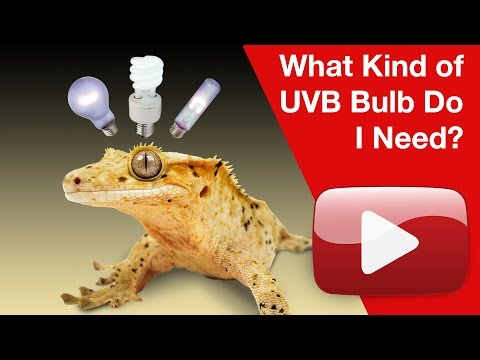 What Kind of UVB Bulb Do I Need?
