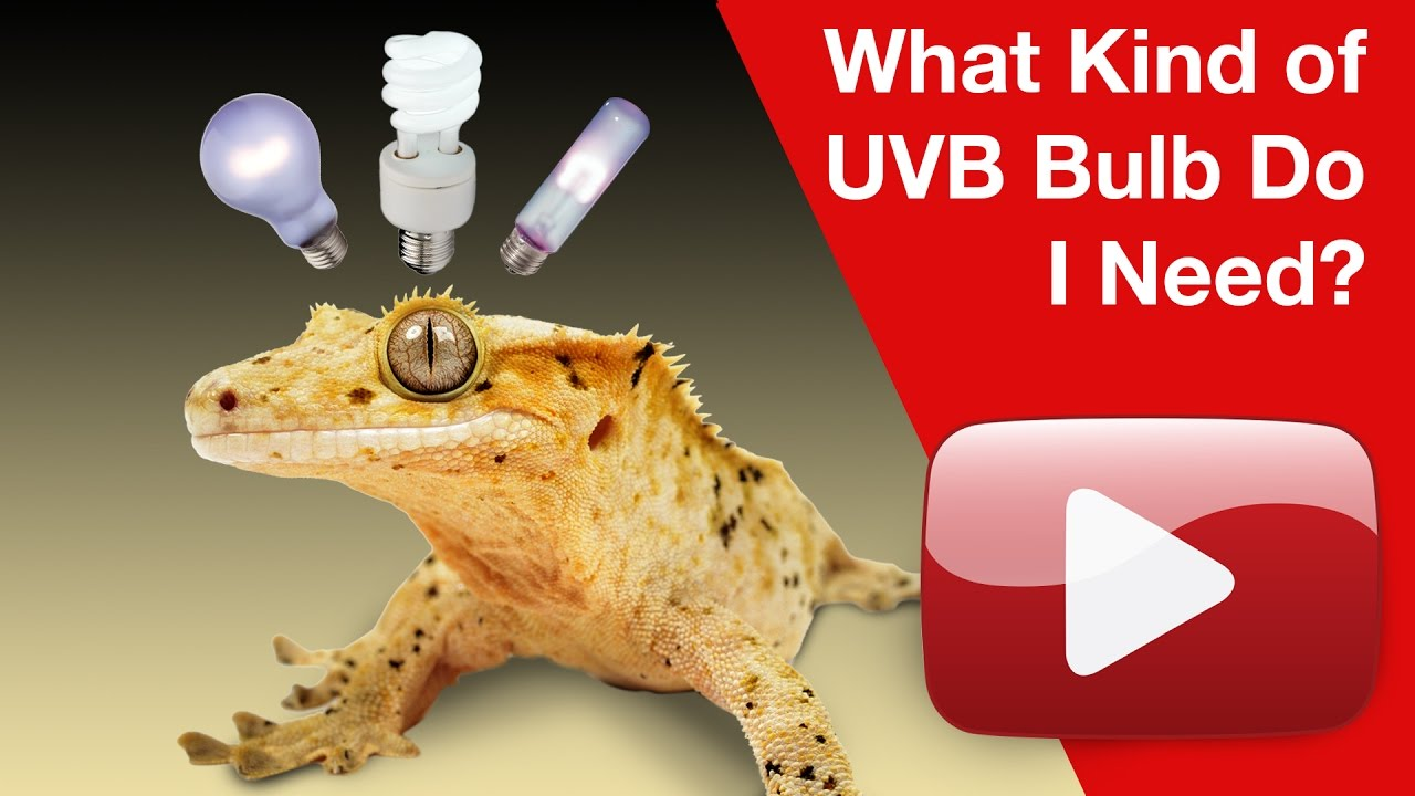 What UVB Bulb do I need for my pet reptile or amphibian