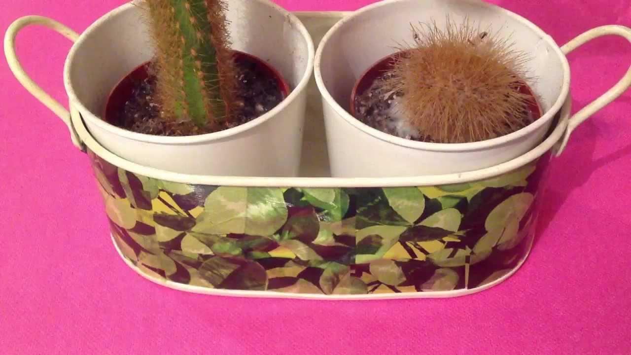 entretenir un cactus faire pousser des cactus youtube. Black Bedroom Furniture Sets. Home Design Ideas
