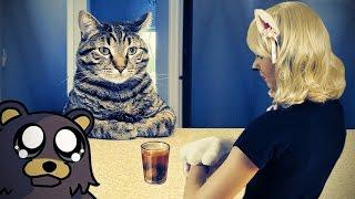 Кот охотника за педобирами. Chris Hansen Cat