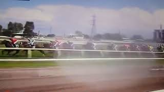 Melbourne cup 2018-Cross Counter