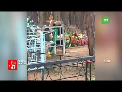 В городе Сатка медведь пришел на кладбище