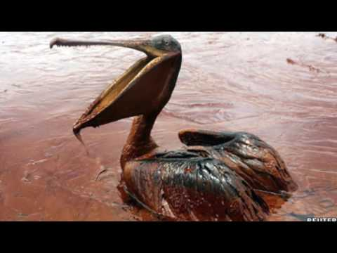 Effects of Oil Spills (Marine Life)